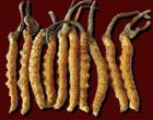 Yarcha-Gumba